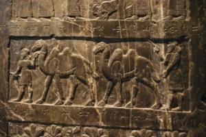 Ancient Camels