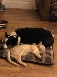 Libby and Shepherd Snoozing